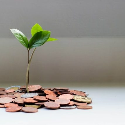Seedling growing from coins to represent paid content